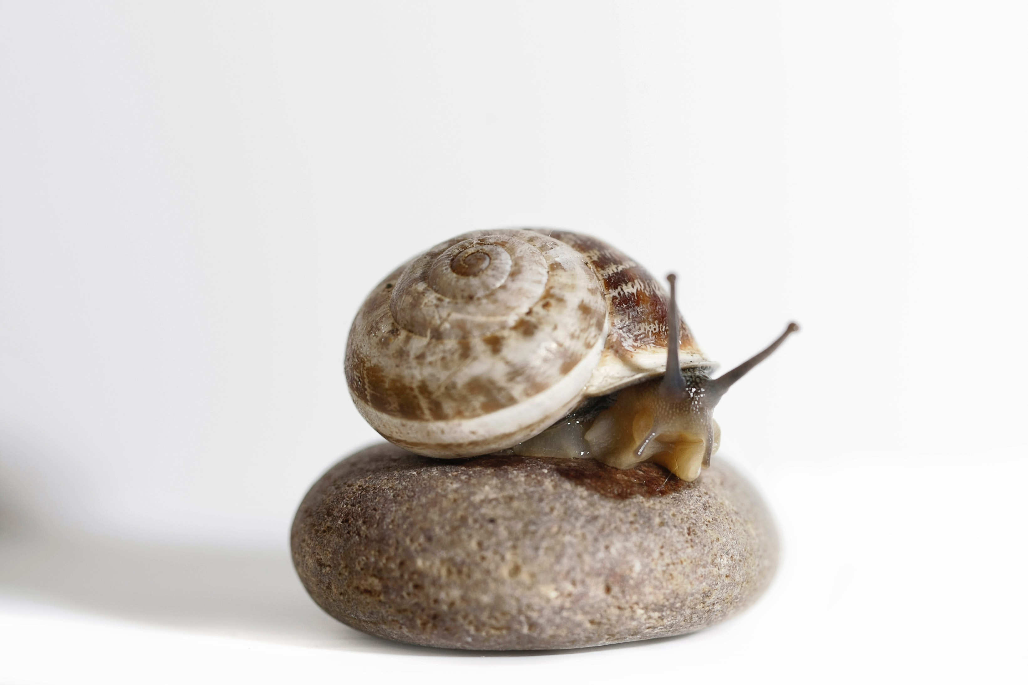 snail with a house